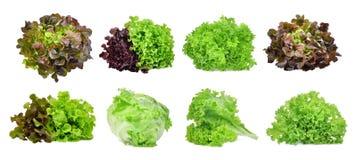 Insieme della verdura della lattuga isolato su bianco Immagine Stock Libera da Diritti
