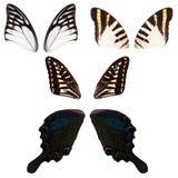 Insieme delle ali della farfalla Fotografia Stock Libera da Diritti