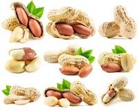 Insieme delle arachidi isolate sui precedenti bianchi Fotografia Stock Libera da Diritti
