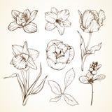 Insieme delle bacche del narciso del tulipano del giglio dell'orchidea dei fiori Illustratio di vettore di schizzo Immagini Stock