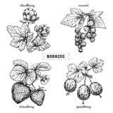 Insieme delle bacche disegnate a mano isolate su fondo bianco Fragola, rovo, uva spina, ribes, su fondo bianco illustrazione di stock