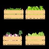 Insieme delle casse con le verdure Fotografie Stock