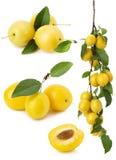 Insieme delle ciliege susine gialle isolate sui precedenti bianchi Fotografia Stock Libera da Diritti