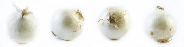 Insieme delle cipolle bianche su un fondo bianco Immagini Stock Libere da Diritti