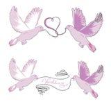 Insieme delle colombe delle nozze di paia con un nastro in becco Immagine Stock Libera da Diritti
