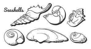 Insieme delle conchiglie del mollusco illustrazione vettoriale