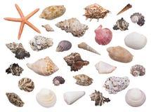 Insieme delle conchiglie differenti con le stelle marine Fotografia Stock