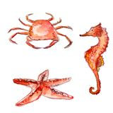 Insieme delle creature disegnate a mano del mare dell'acquerello: granchio, stelle marine e cavalluccio marino arancio Illustrazi Immagini Stock