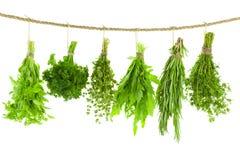 Insieme delle erbe/che appendono della spezia e che si asciugano/   sul BAC bianco Fotografia Stock Libera da Diritti