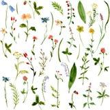 Insieme delle erbe e dei fiori del disegno dell'acquerello Fotografie Stock Libere da Diritti