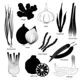 Insieme delle erbe e delle spezie per cucinare Fotografia Stock Libera da Diritti