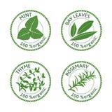 Insieme delle etichette delle erbe 100 organici Illustrazione di vettore Immagini Stock Libere da Diritti