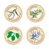 Insieme delle etichette piane dell'olio essenziale 100 per cento Eucalyptus, cipresso, albero di canfora, ginepro illustrazione di stock