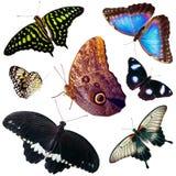 Insieme delle farfalle isolate Fotografia Stock