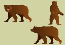 Insieme delle figure dell'orso bruno nelle pose differenti Fotografia Stock