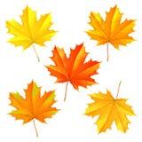 Insieme delle foglie cadute autunno Immagini Stock