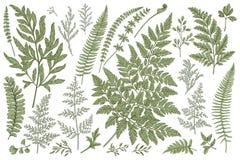 Insieme delle foglie della felce Immagine Stock Libera da Diritti
