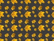 Insieme delle foglie di acero Fotografia Stock Libera da Diritti