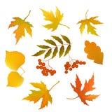 Insieme delle foglie di autunno Fotografie Stock Libere da Diritti