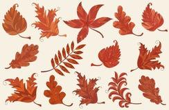 Insieme delle foglie di autunno Fotografia Stock