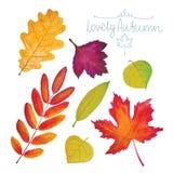 Insieme delle foglie di autunno dell'acquerello Immagine Stock