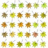 Insieme delle foglie di autunno di colore differente trama Immagine Stock