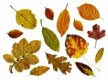 Insieme delle foglie di autunno isolate Fotografie Stock Libere da Diritti