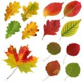 Insieme delle foglie di autunno, isolato Fotografia Stock Libera da Diritti