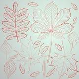 Insieme delle foglie di caduta Immagini Stock Libere da Diritti