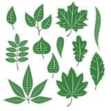 Insieme delle foglie differenti degli alberi Immagine Stock Libera da Diritti