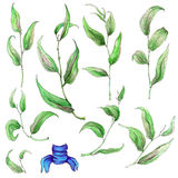 Insieme delle foglie dipinte a mano dell'acquerello Immagine Stock Libera da Diritti