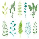 Insieme delle foglie e dei rami dell'acquerello isolati su bianco Fotografia Stock Libera da Diritti
