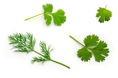 Insieme delle foglie e dell'aneto del prezzemolo su bianco Fotografia Stock Libera da Diritti