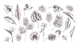 Insieme delle foglie esotiche delle piante differenti disegnate a mano con le linee di contorno su fondo bianco Raccolta di tropi Immagini Stock Libere da Diritti