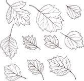 Insieme delle foglie lineari del disegno Fotografie Stock