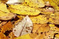 Insieme delle foglie sulla tavola Fotografia Stock