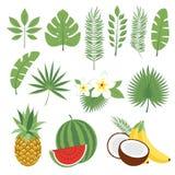Insieme delle foglie tropicali sveglie e frutti, foglie di palma e fiori Ananas, anguria, banane, noce di cocco Raccolta dello sc Immagine Stock Libera da Diritti