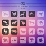 Insieme delle icone dei mammiferi Immagini Stock Libere da Diritti