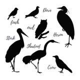Insieme delle icone dell'uccello di vettore Immagini Stock