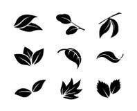 Insieme delle icone nere della foglia su fondo bianco Fotografia Stock