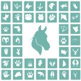 Insieme delle icone semplici degli animali Fotografia Stock
