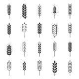 Insieme delle icone semplici delle orecchie del grano Fotografie Stock Libere da Diritti