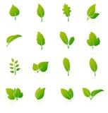 Insieme delle icone verdi della foglia su fondo bianco Immagini Stock Libere da Diritti