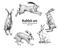 Insieme delle illustrazioni disegnate a mano del coniglio isolate su fondo bianco Illustrazione dell'annata di vettore Immagine Stock Libera da Diritti
