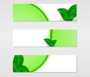Insieme delle insegne di vettore con le foglie verdi fresche con le gocce e le linee verde di rugiada Fotografie Stock Libere da Diritti