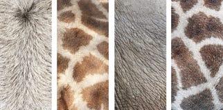 Insieme delle insegne verticali con struttura di pelle animale Fotografia Stock