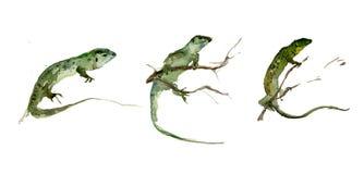 Insieme delle lucertole verdi sui precedenti bianchi Pittura dell'acquerello Fotografia Stock Libera da Diritti