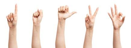 Insieme delle mani femminili Fotografie Stock