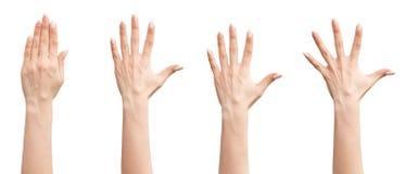 Insieme delle mani femminili Fotografia Stock Libera da Diritti