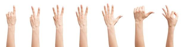 Insieme delle mani femminili Fotografie Stock Libere da Diritti